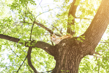 a multi-colored cat climbs a tree