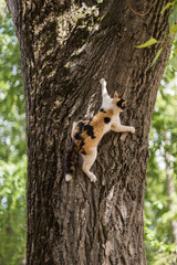 A picture of a cat climbing a tree