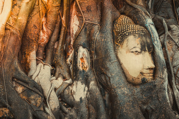 Amazing Buddha head statue in bodhi tree roots  at Wat Maha That Ayutthaya. Buddha head made from sand stone stuck in bodhi tree roots.