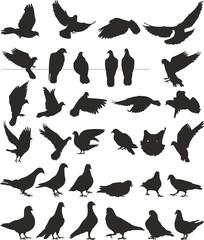 pigeon vector silhouettes bird