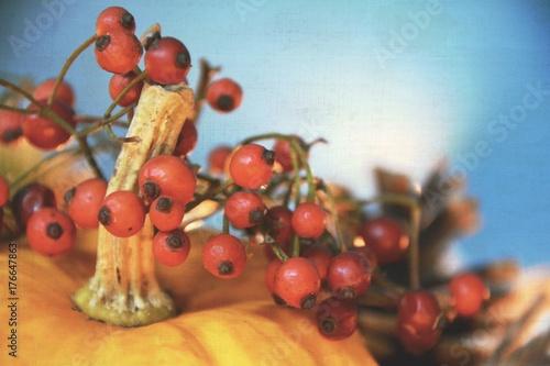 herbst dekoration k rbis stockfotos und lizenzfreie bilder auf bild 176647863. Black Bedroom Furniture Sets. Home Design Ideas