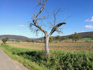 Agrarlandschaft mit totem Apfelbaum