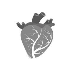 Isolated human heart