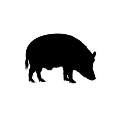 Silhouette of eating boar.