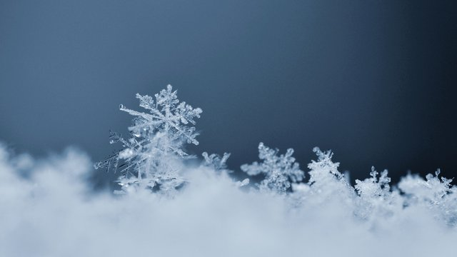Snowflake. Macro photo of real snow crystal. Beautiful winter background seasonal nature and the weather in winter.