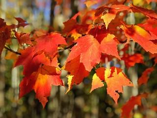 October Leaves