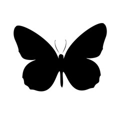 Isolated outline of a butterfly on a white background. Abstract vector pattern of butterflies