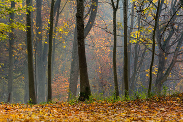 Foggy forest in the morning.