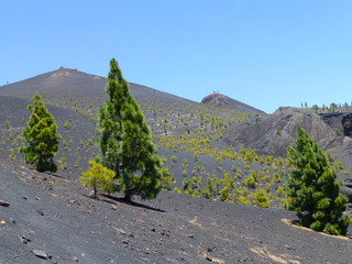 Volcanic landscape with green trees on the island of La Palma, one of the Canary Islands