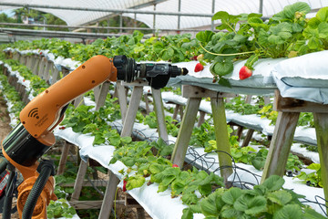 Agriculture vertical farming technology , artificial intelligence precision concepts, Farmer use smart farm automation robot assistant image processing for detection weed ,spray chemical. Fototapete