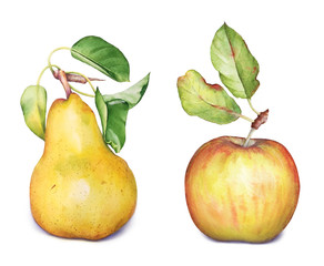 Watercolor hand drawn illustration of apple and pear fruit with leaves on white background.