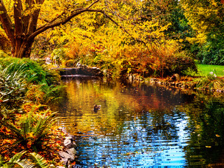 Watrestream during autumn season  in the public Beacon Hill Park, Victoria BC, Canada