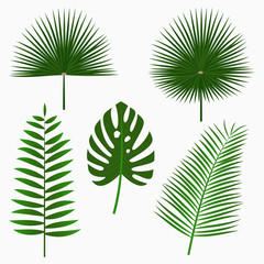 Tropical palm leaves, jungle leaf set isolated on white background. Exotic plants. Vector illustration.