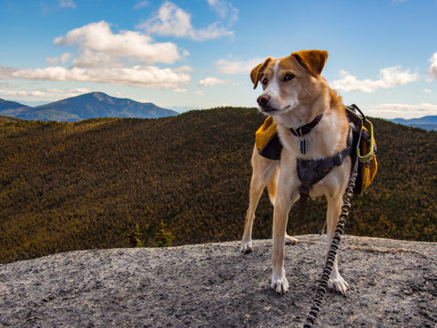 Dog with Backpack on Mountain Summit
