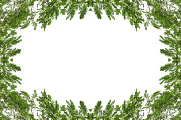 Tree branch border frame for background with space for your design image or text