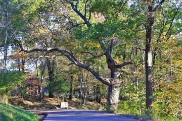 Cool Tree in Autumn