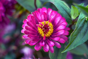 large pictures of flowers. beautiful flower in the garden.