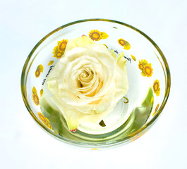 one rose in a glass on a white background,