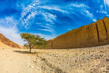 Tree desert of Umbrellata Acacia