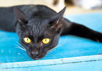 black cat with yellow eye