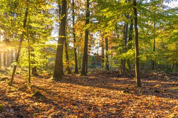 Herbst im sonnigen Laubwald