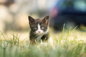 Black and white grumpy sad kitty
