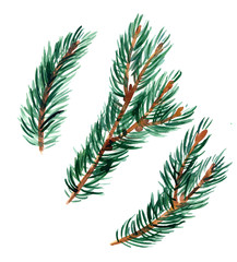 spruce twigs, watercolor hand drawn elements for Christmas and new year design, tree branches
