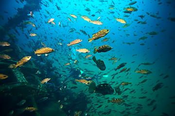 sea fish underwater macro photo