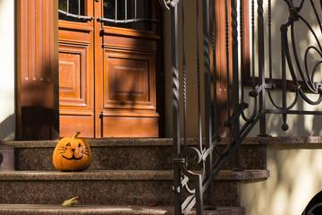 Funny Halloween pumpkin cat