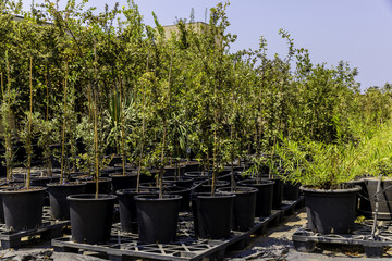 Garden plants nursery with vegetation in black buckets ready for planting standing outside on elevated surface