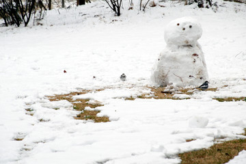 Japanese pied wagtail and snowman.