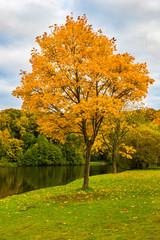 Autumn tree in autumn park, beautiful autumn landscape.