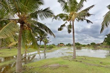 Kakativu Morass, Kalpitiya, Sri Lanka