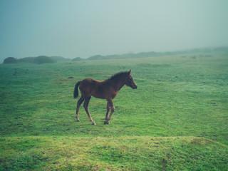 Horse running on the moor in fog