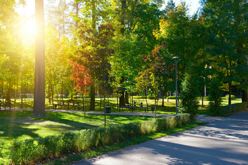 sunset in autumn park