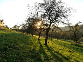 Sonnenuntergang durch Bäume fotografiert