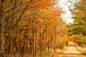 Fall on Murphy Lake II