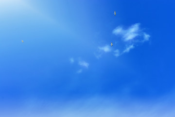 white seagull on blue sky background