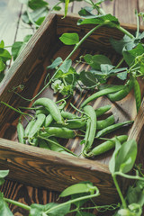 Pods of green peas and pea on a dark wooden surface. Vintage wooden surface for design with beautifully located pods of green peas. Toned and coloring photo. Shallow depth of field.