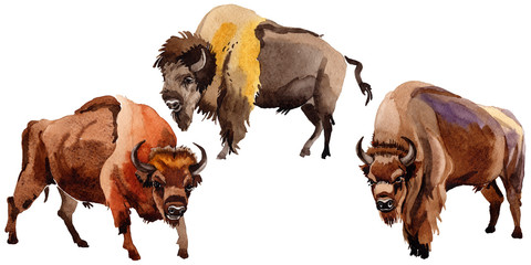 Exotic bison wild animal in a watercolor style isolated. Full name of the animal: bison, buffalo. Aquarelle wild animal for background, texture, wrapper pattern or tattoo.