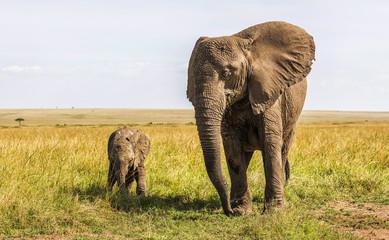 Safari Elephants in the Masai Mara