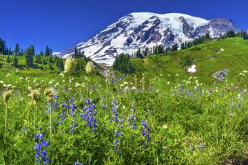 Bistort Lupine Wildflowers Paradise Mount Rainier National Park Washington
