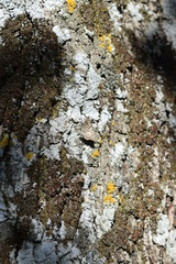 butterfly camouflage