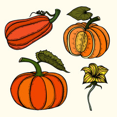 Pumpkin autumn collection.