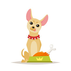 chihuahua dog preparing for food