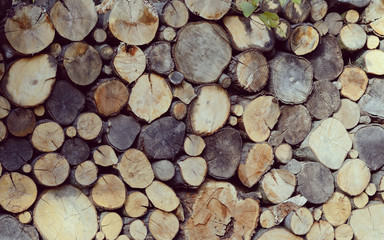 Stack of logs. A lot of cuted branches and trunks Natural wooden background.