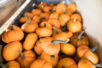 Small pumpkins in a bin 2