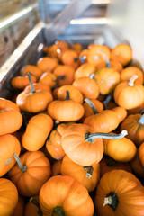 Small pumpkins in a bin 1