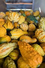 Bin of fall autumn gourds 3
