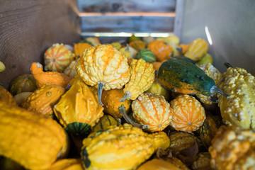 Bin of fall autumn gourds 2